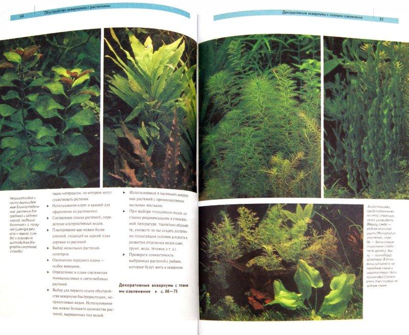 Кассельман эхинодорус самое популярное аквариумное растение скачать