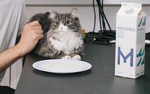 Кошка съела товар: дизайнеры и их коты оценивают модно упакованную сметану
