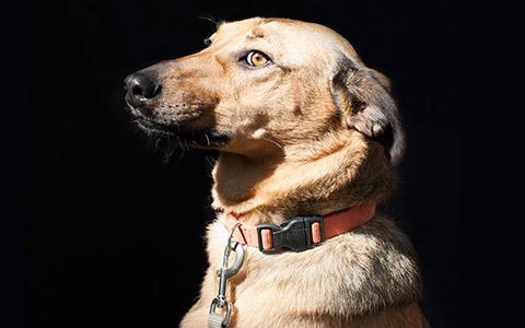 Собаки-помогаки: как работает пет-терапия