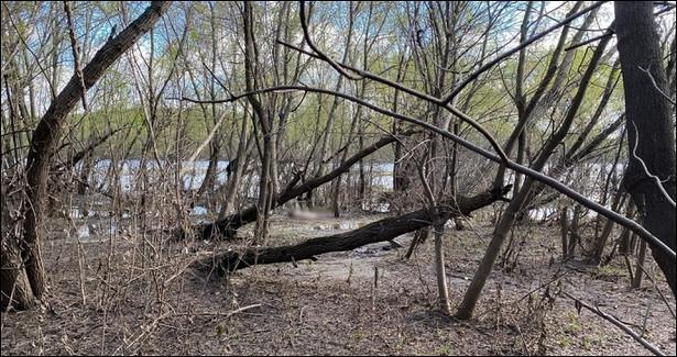 Найден предполагаемый родственник женщины, труп которой обнаружили вЛесопарке