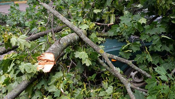 ВПетербурге ураганный ветер повалил деревья надетскую площадку иавтомоби ...