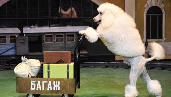 Московский театр зверей имени Дурова отпразднует 105-летие