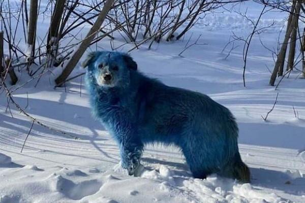 Синих собак изДзержинска доставили вветеринарный госпиталь