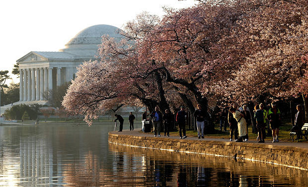 Date of cherry blossom festival in washington dc