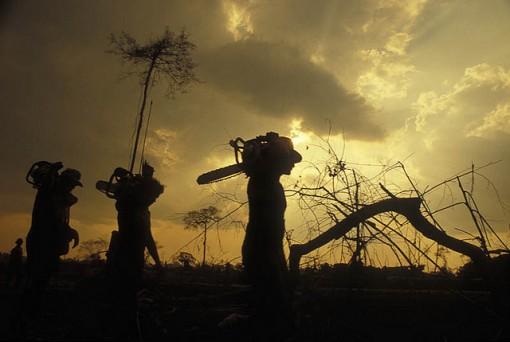 Hazards Of Deforestation - buyworktopessayorg