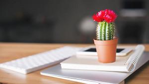 Зачем ставить кактус рядом сдомашней техникой