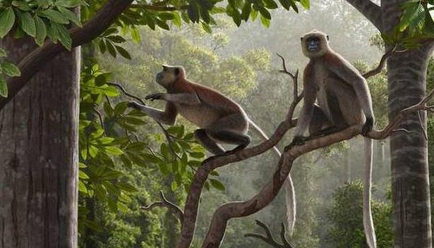 Найдены останки самой древней обезьяны запределами Африки