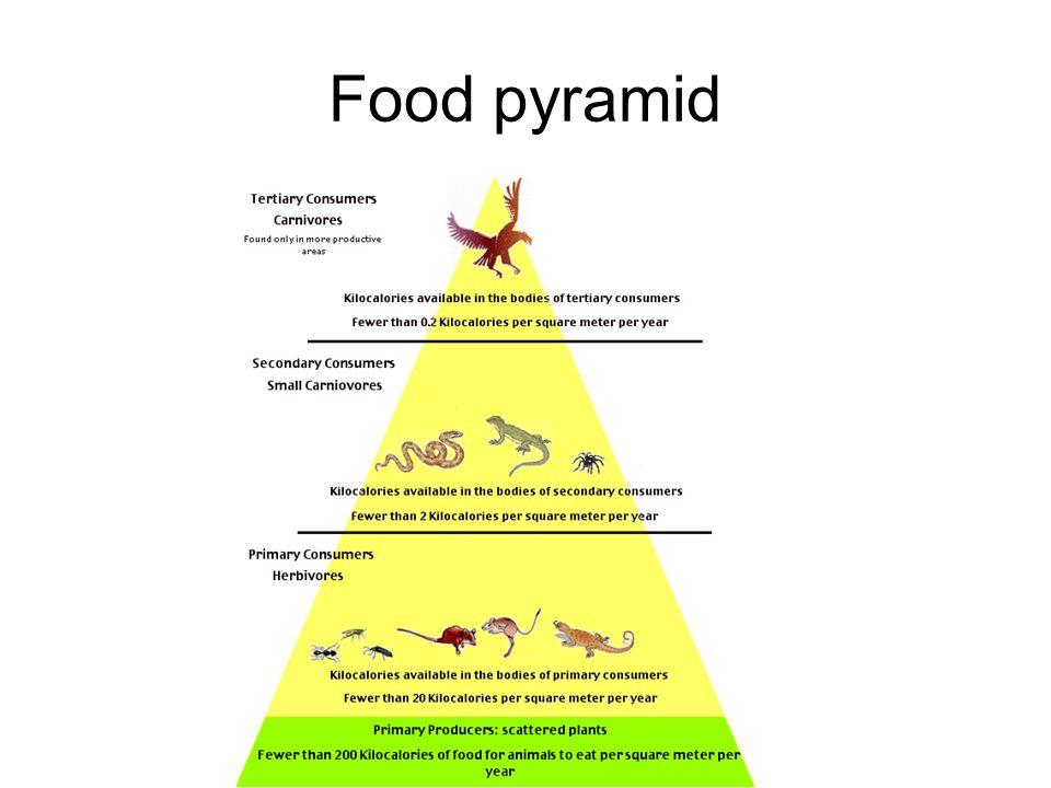 food web pyramid
