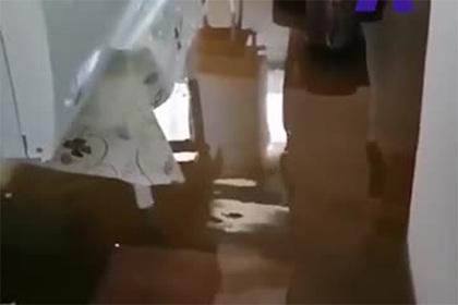 Последствия наводнения вХабаровском крае сняли навидео