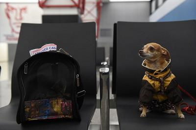 Москвичам напомнили, какправильно перевозить домашних животных вдлительных поездках