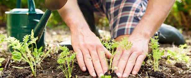 Депутаты Приангарья стали участниками круглого стола опроблемах садоводческих товариществ