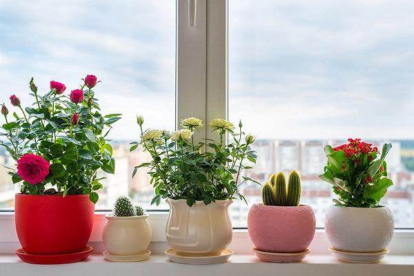 Названы опасные комнатные растения
