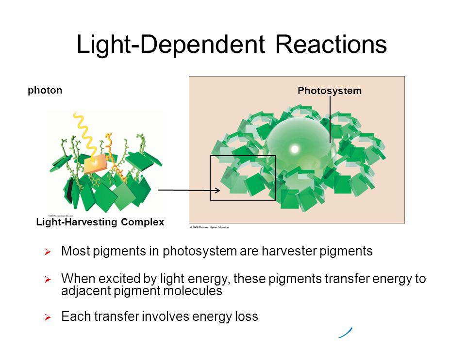 Illuminating Photosynthesis - Science - Interactive - PBS