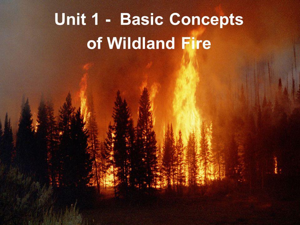 To Build a Fire Summary - eNotescom