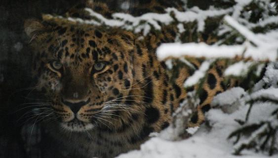 Филиал Московского зоопарка может появиться в новейшей столице России