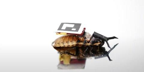 Тараканов-киборгов создали вЯпонии
