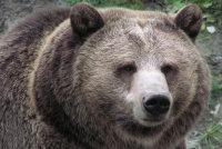 Видео: Житель СШАобнаружил всвоем бассейне медведя с«Маргаритой»