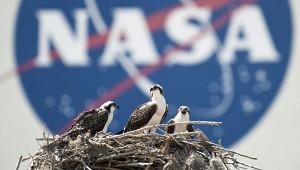 NASA собирается сократить присутствие вРоссии