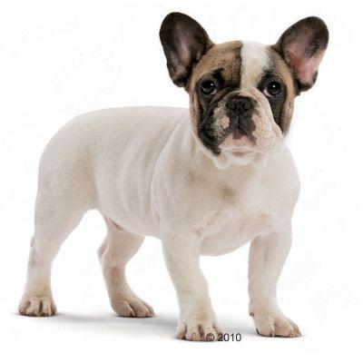 Корм royal canin для французского бульдога