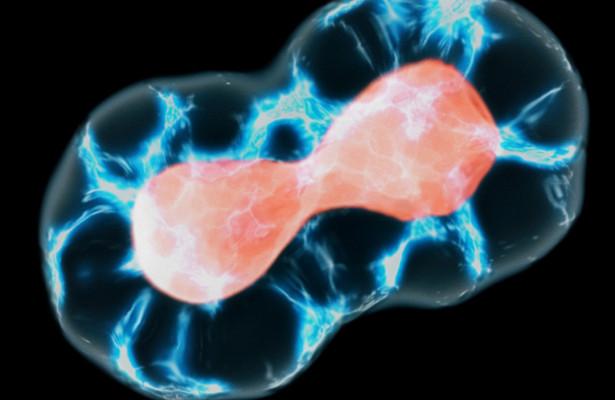 Слипание клеток способствует формированию тканей организма