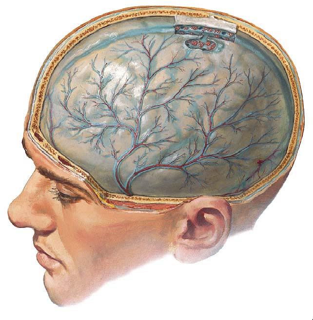 Почему у подростков болит голова? Головная боль у