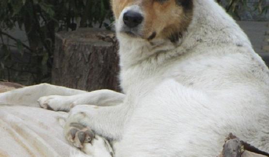 ВРоссии нападения собак налюдей стали повсеместными