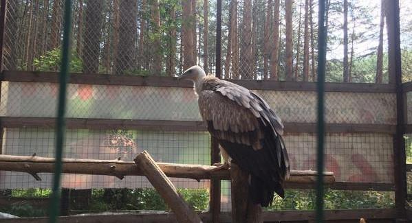 Питомнику на«уральской Рублевке» грозит штраф закраснокнижных птиц