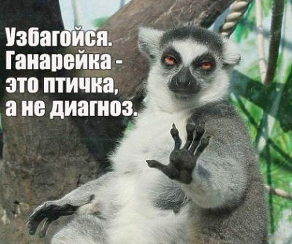 https://img01.rl0.ru/88821f6b8a5767b524bfa00a958828ce/c595x498/f3.mylove.ru/d_nw2gPANH99B6NF.jpg