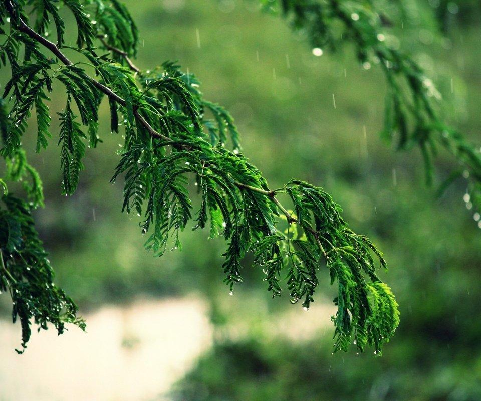 Как запело дерево