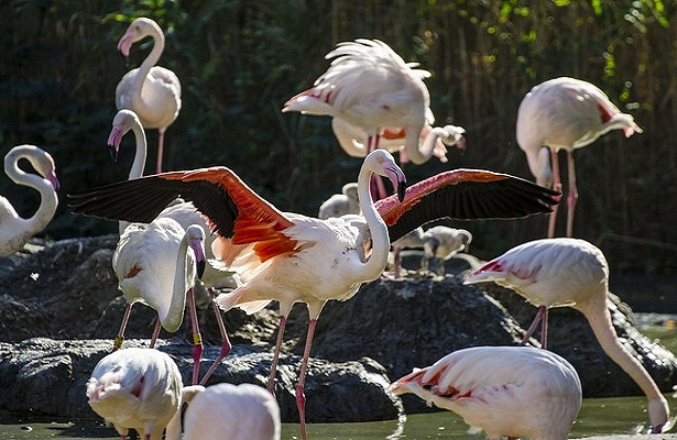 Венский зоопарк— одна изсамых интересных достопримечательностей столицы