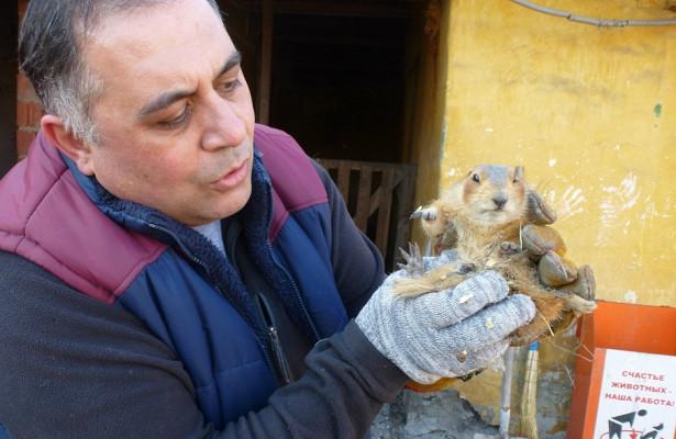 «Выздоровеет— вернём всемью»: челябинский Айболит спасает суслика, попавшего подмашину