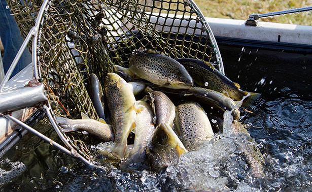 «Социальная» красная рыба поступит вмагазины Хабаровска