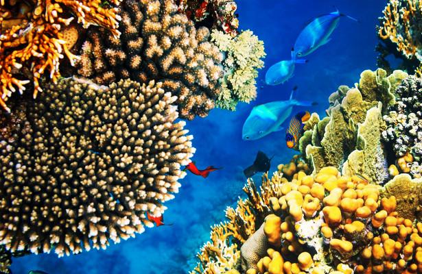 Шарм-Эль-Шейх— самый престижный изморских курортов наКрасном море