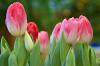 Цветов весны причудливые краски