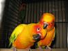 Попугаи и экзотические птицы