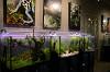 Галерея растительных аквариумов