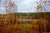 Озеро Щепкино Болото