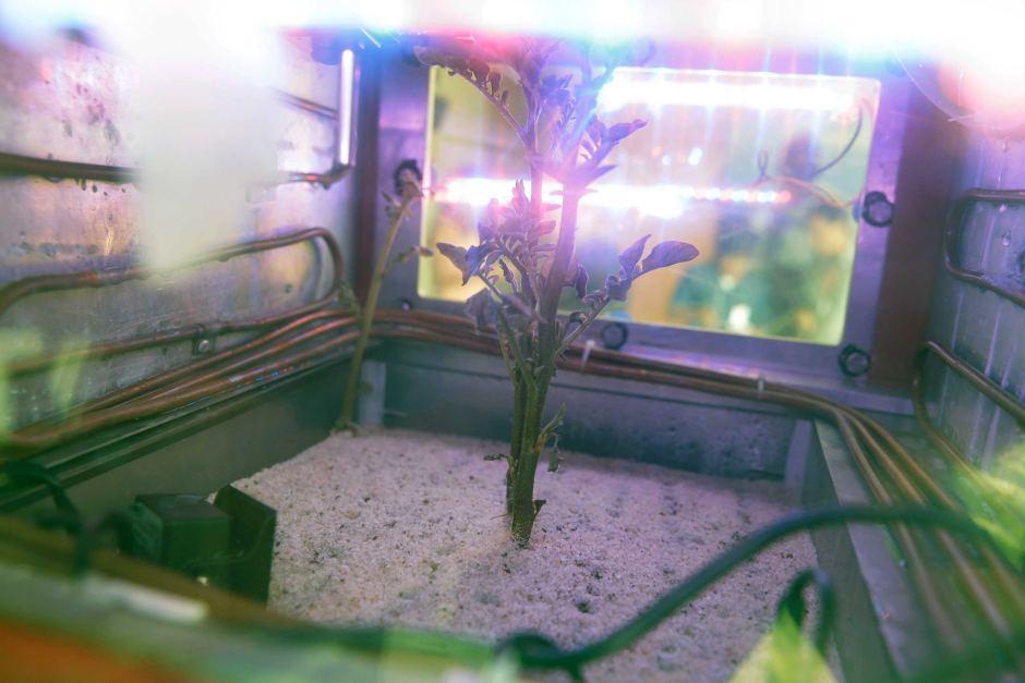 Ученые доказали, что можно выращивать овощи наМарсе