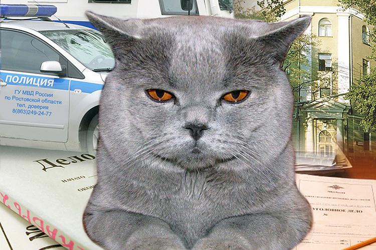 Кот гу-гу