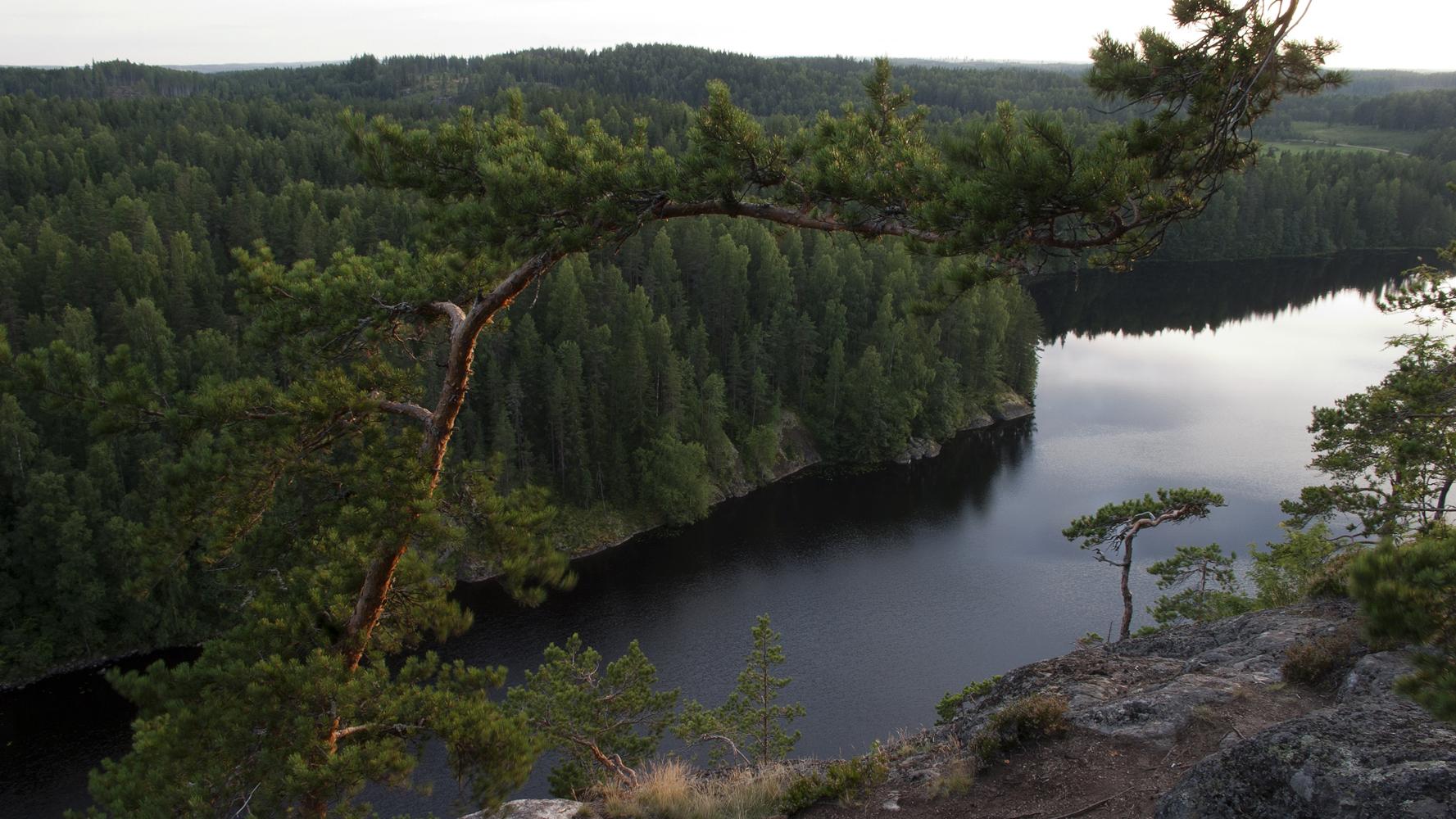 Чудесный лес смотреть фото