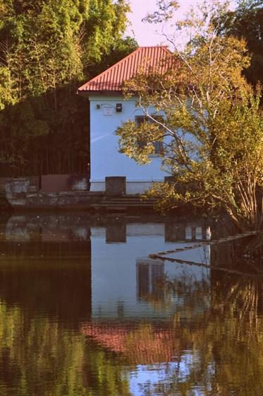 Фото парк Южные культуры