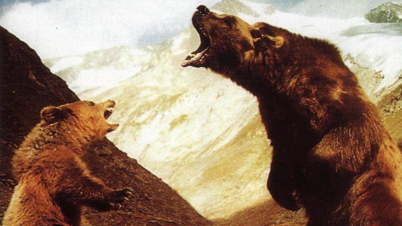 Медведь смотреть фото