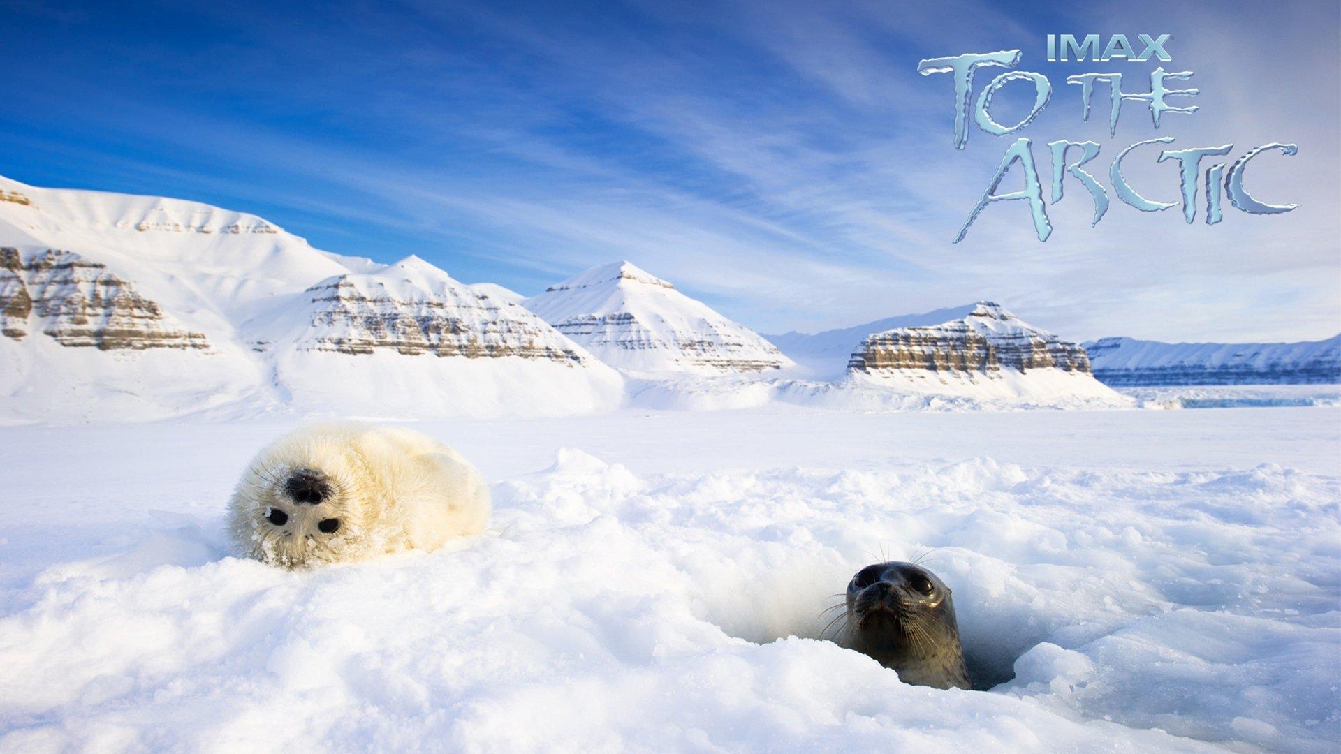 Арктика 3D смотреть фото