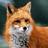 Alice_the_Fox
