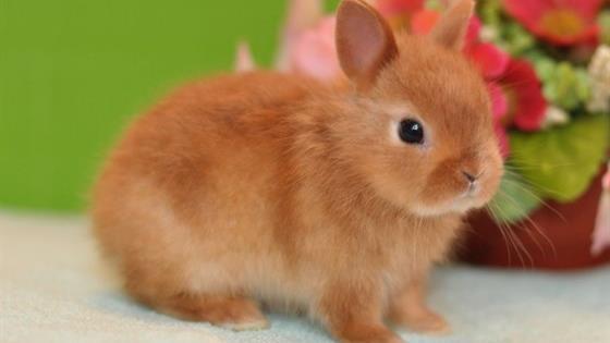 Выставка декоративных крольчат