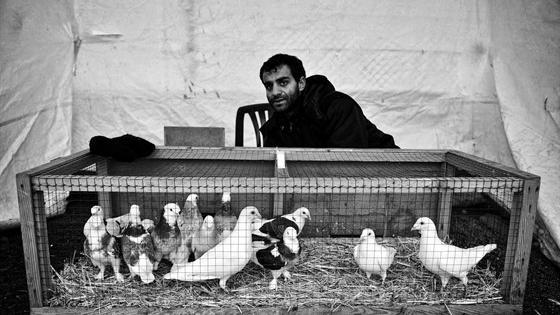 Стамбул. Фотографии Серканта Хекимджи