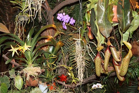 II Зимний фестиваль орхидей