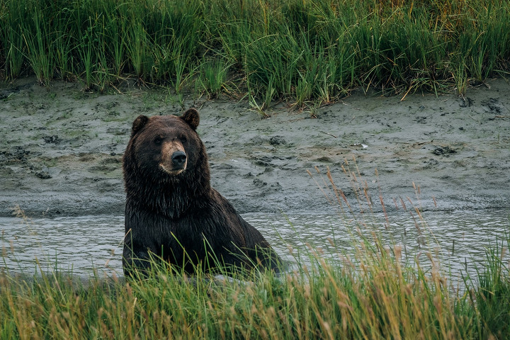 Аляска в дневнике фотографа Влада Сохина