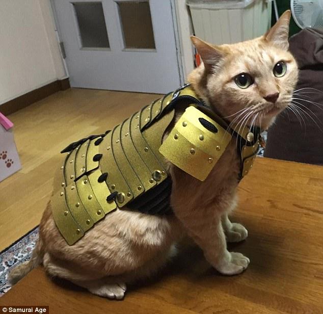 В Японии запустили производство доспехов для домашних животных