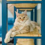 Ресторан Kotomania Cats & Relax Club - фотография 6